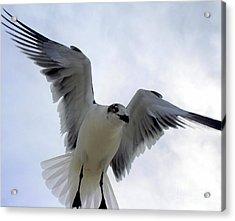 Seagull In Flight I Acrylic Print
