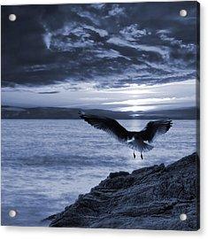 Seagull Acrylic Print by Jaroslaw Grudzinski