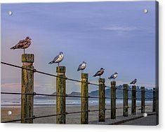 Seagull Lineup Acrylic Print