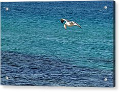 Acrylic Print featuring the photograph Seagull  Meal  Time by Arik Baltinester