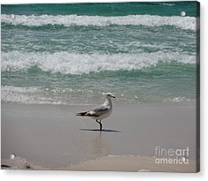 Seagull Acrylic Print by Megan Cohen