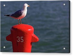Seagull Number 35 Acrylic Print