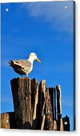 Seagull On A Dock 2 Acrylic Print by Andrew Dinh