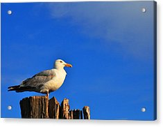 Seagull On A Dock Acrylic Print by Andrew Dinh