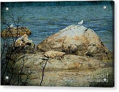 Seagull On A Rock Acrylic Print