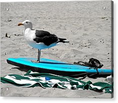 Seagull On A Surfboard Acrylic Print by Christine Till