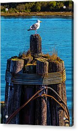 Seagull On Pilings  Acrylic Print by Garry Gay