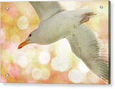 Seagull On Pink And Yellow Sky Acrylic Print