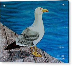 Seagull On The Shore - Gaviota En La Costa Acrylic Print by Melvin Rodriguez