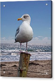 Seagull On The Shoreline Acrylic Print