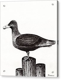 Seagull Portrait On Pier Piling E3 Acrylic Print by Ricardos Creations