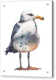 Seagull Print Acrylic Print by Alison Fennell