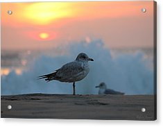 Acrylic Print featuring the photograph Seagull Seascape Sunrise by Robert Banach
