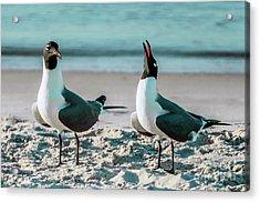 Seagull Serenade 4954 Acrylic Print