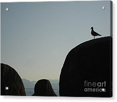 Seagull Silhouette Acrylic Print by Silvie Kendall