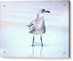 Seagull Stance Acrylic Print by JAMART Photography