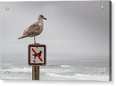 Seagull Standing On Sign And Looking At The Ocean Acrylic Print