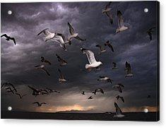 Seagull Storm Acrylic Print by Gene Praag
