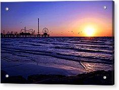 Seagull Sunrise Acrylic Print