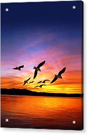 Seagull Sunset   Acrylic Print by Gravityx Designs