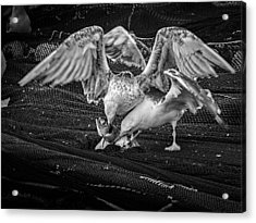 Seagulls And Fish Acrylic Print by Bob Orsillo