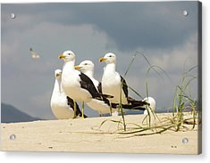 Seagulls At The Beach Acrylic Print