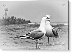 Seagulls In Love Beach Ocean Black White Print Photography Seascape Seagull Acrylic Print by Pictures HDR