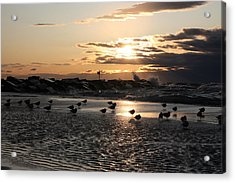 Seagulls In The Surf At Sunset Acrylic Print by Christopher Purcell
