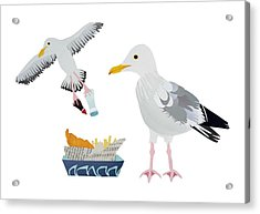 Seagulls Acrylic Print by Isobel Barber
