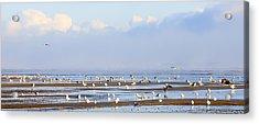 Seagulls On A Beach Acrylic Print by Svetlana Sewell