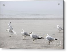 Seagulls On Foggy Beach Acrylic Print by Elena Elisseeva