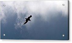 Acrylic Print featuring the photograph Seagull's Sky 1 by Jouko Lehto