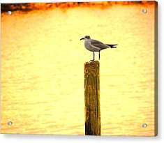 Seagulls Sunset Acrylic Print by Laura Brightwood