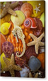 Seahorse And Assorted Sea Shells Acrylic Print