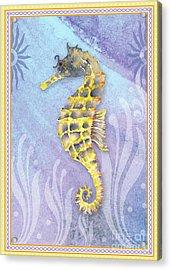 Seahorse Blue Acrylic Print by Amy Kirkpatrick
