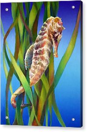 Seahorse I Among The Reeds Acrylic Print by Nancy Tilles