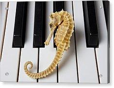 Seahorse On Keys Acrylic Print