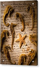 Seahorses And Starfish On Old Letter Acrylic Print by Garry Gay