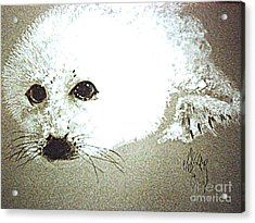 Seal Pup Portrait Acrylic Print by Paul Miller