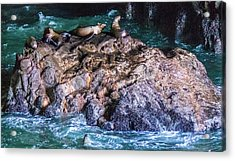 Acrylic Print featuring the photograph Seal  Rock by Jonny D