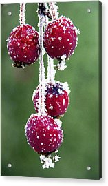 Seasonal Colors Acrylic Print by Marilyn Hunt