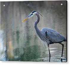 Acrylic Print featuring the photograph Searching For Lunch by Julie Andel