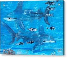 Searching Sharks Acrylic Print