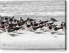 Seascape Gulf Coast, Ms F40n Acrylic Print