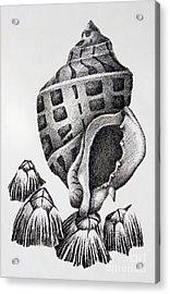 Seashell And Barnacles Acrylic Print by James Williamson