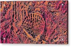 Seashell Delight Acrylic Print by Rachel Hannah
