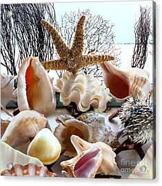 Seashell Galore Acrylic Print