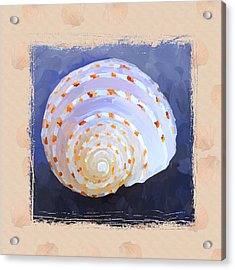 Seashell Iv Grunge With Border Acrylic Print by Jai Johnson