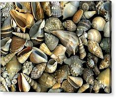 Seashell Medley Acrylic Print by Christian Slanec