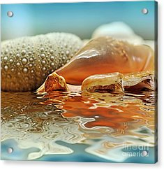 Seashell Reflections On Water Acrylic Print